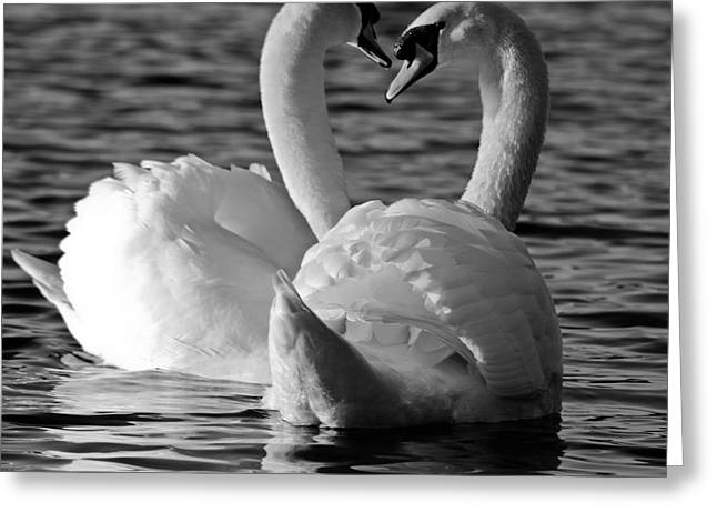 Black And White Swan Heart Greeting Card by Geraint Rowland
