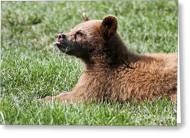 Black Bear Cub I Greeting Card