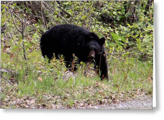 Black Bear Greeting Card by Mark Caldwell
