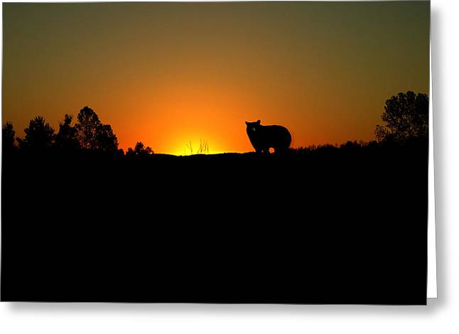 Black Bear Sunset Greeting Card by TnBackroadsPhotos