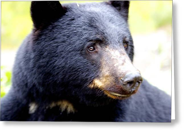 Greeting Card featuring the photograph Black Bear by Sylvia Hart