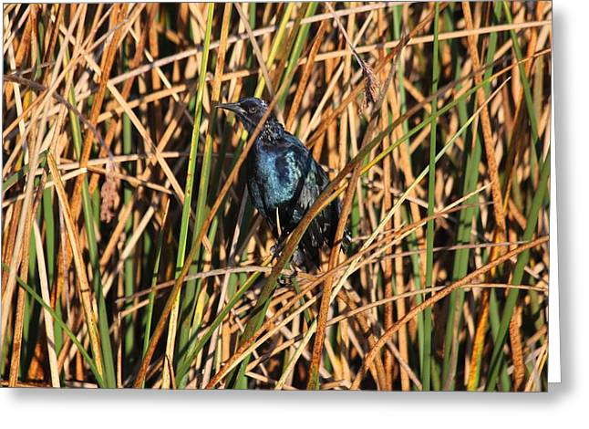 Greeting Card featuring the photograph Black Bird by Jeanne Andrews