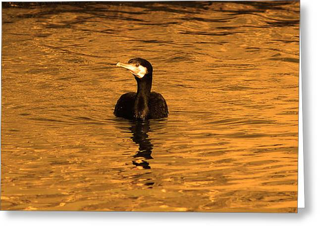 Black Bird On Surise Greeting Card by Radoslav Nedelchev