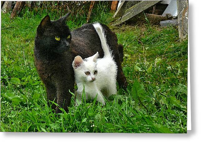 Black Cat Defends His White Kitten Greeting Card