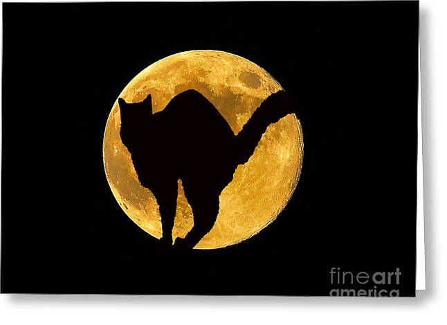 Black Cat Moon Greeting Card by Al Powell Photography USA