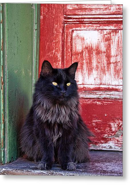 Black Cat Red Door Greeting Card by Carol Leigh