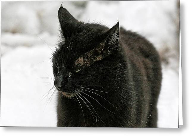 Black Cat White Snow Greeting Card
