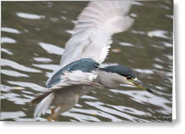 Greeting Card featuring the photograph Black Crowned  Night Heron by Amy Gallagher