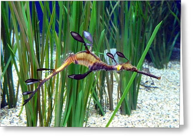 Greeting Card featuring the photograph Black Dragon Seahorse by Carla Parris
