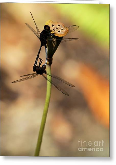 Black Dragonfly Love Greeting Card
