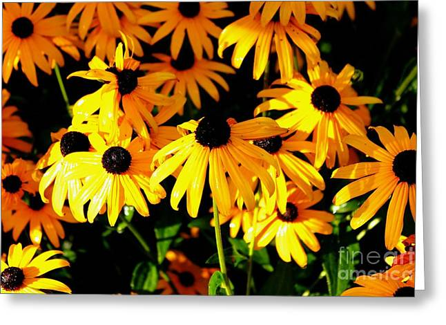 Black Eyed Susans Greeting Card by Theresa Willingham