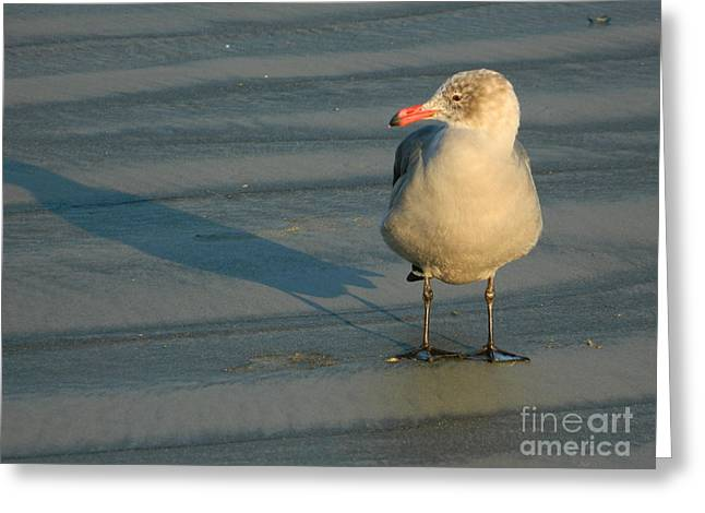 Greeting Card featuring the photograph Black Feet by Everette McMahan jr
