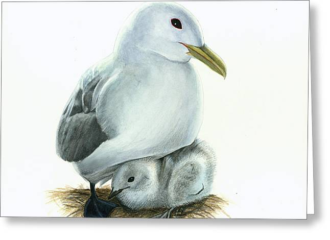 Black-legged Kittiwake Parent And Chick Greeting Card by Logan Parsons