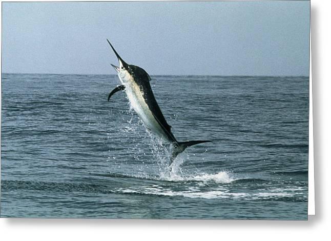 Black Marlin Greeting Card