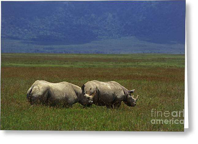 Black Rhinos - Ngorongoro Crater Tanzania Greeting Card by Craig Lovell