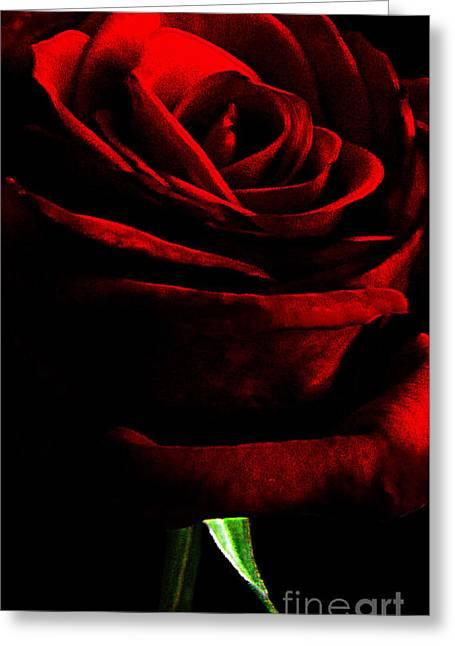 Black Shadows On Red Rose Greeting Card by EGiclee Digital Prints