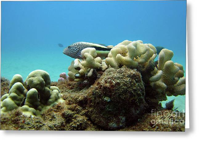 Black Side Hawkfish Greeting Card