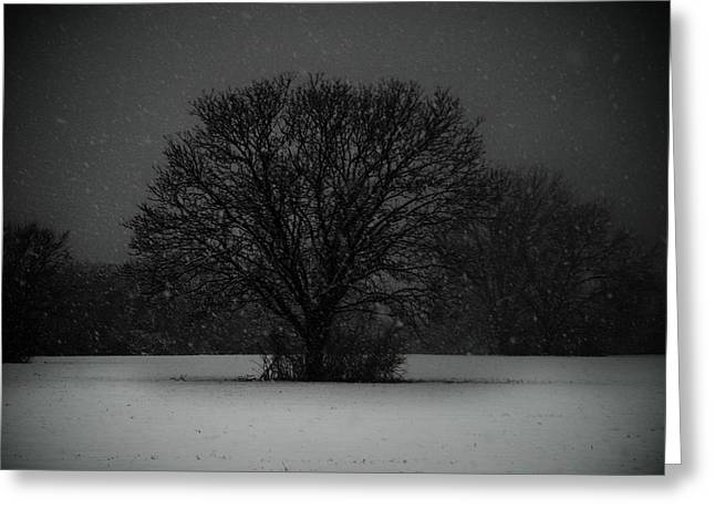 Black Snow Tree Greeting Card by Sonja Quintero
