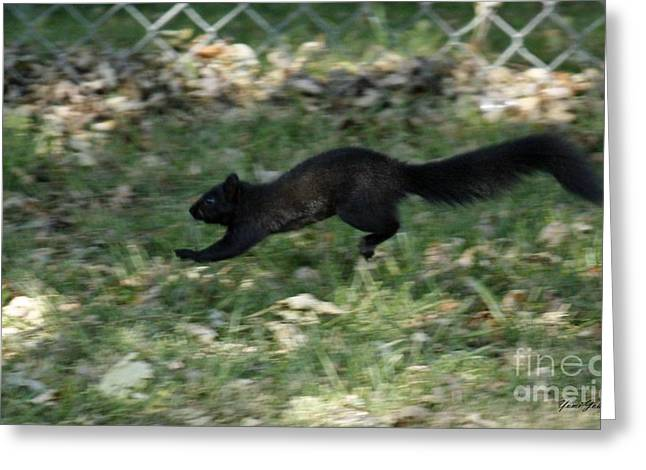 Greeting Card featuring the photograph Black Squirrl On Run by Yumi Johnson