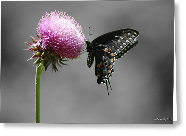 Black Swallowtail And Thistle Greeting Card