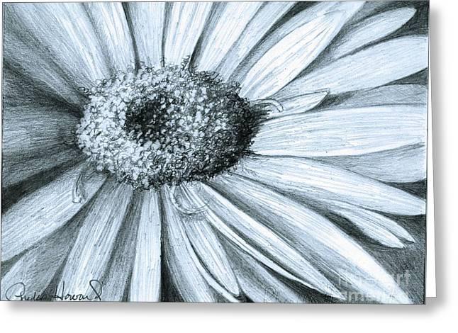 Black White Gerber Greeting Card by Phyllis Howard