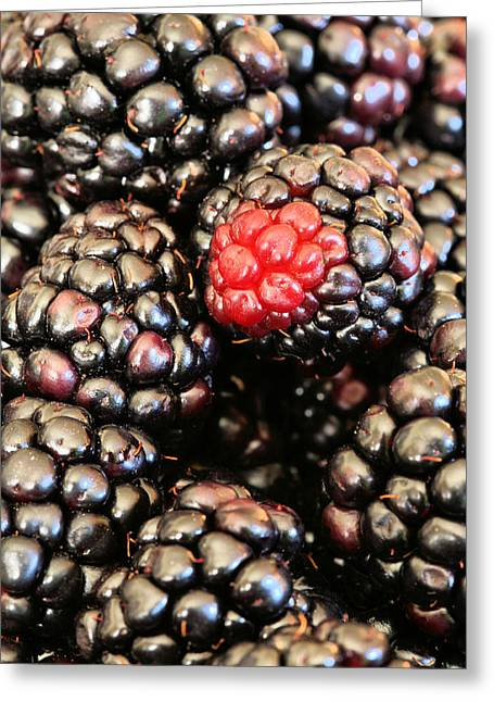 Blackberries  Greeting Card by JC Findley