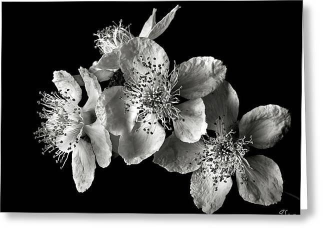 Blackberry Flowers In Black And White Greeting Card