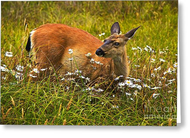 Blacktail Greeting Card