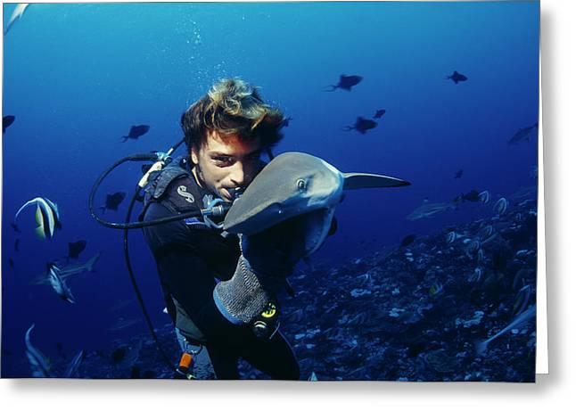 Blacktip Reef Shark Greeting Card by Alexis Rosenfeld