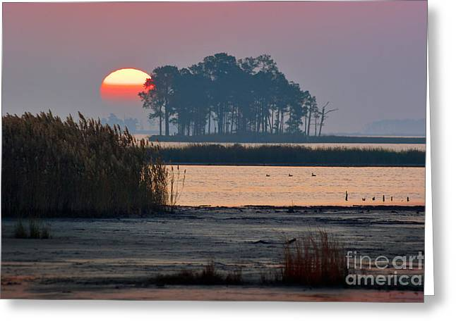Blackwater Orb Greeting Card by Susan Isakson
