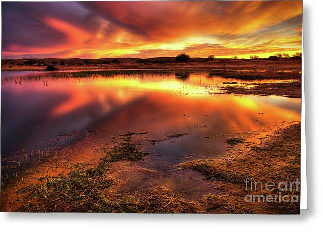 Blazing Sky Greeting Card by Carlos Caetano