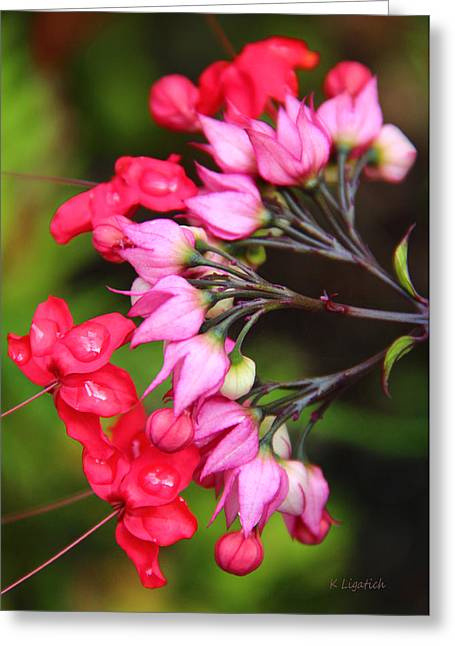 Greeting Card featuring the photograph Bleeding Hearts by Kerri Ligatich