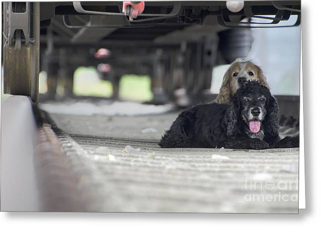 Blonde And Black Dogs Greeting Card by Mats Silvan