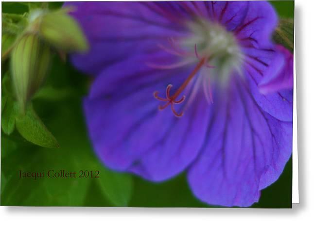 Bloom IIi Greeting Card