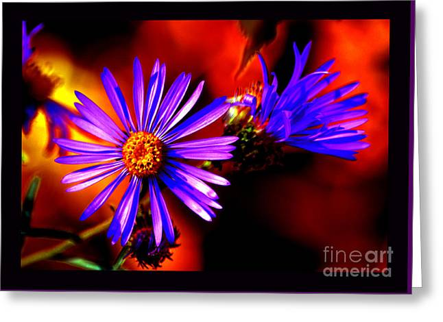 Blooming Asters Greeting Card by Susanne Still