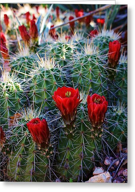 Blooming Cactus Greeting Card by Bruce Bley