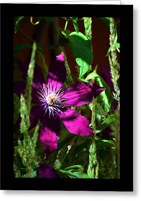 Greeting Card featuring the photograph Blooming Clematis by Susanne Still