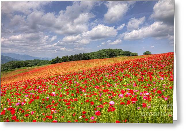 Blooming In The Plateau Greeting Card by Tad Kanazaki