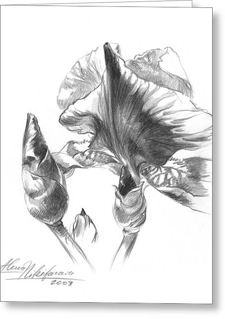 Blooming Iris  Greeting Card