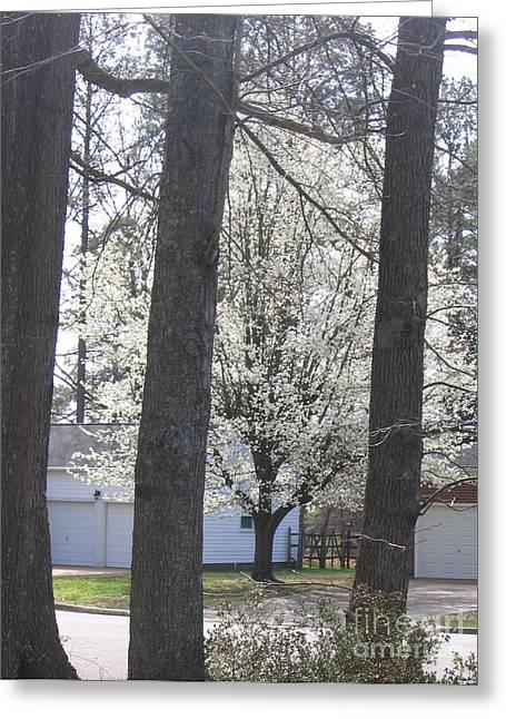 Blooming Tree Greeting Card by Marlene Robbins