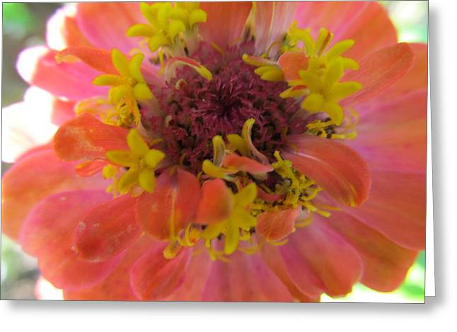 Greeting Card featuring the photograph Blooming Within by Tina M Wenger