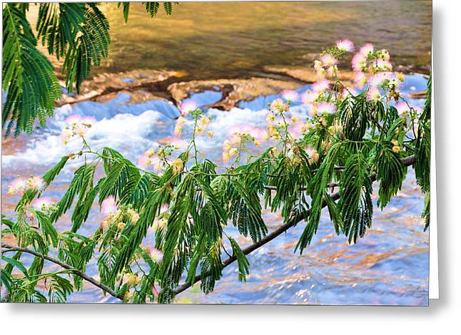 Blooms Over The River Greeting Card by Jan Amiss Photography