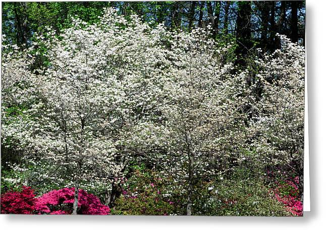 Blossom Explosion Greeting Card by Christopher McPhail