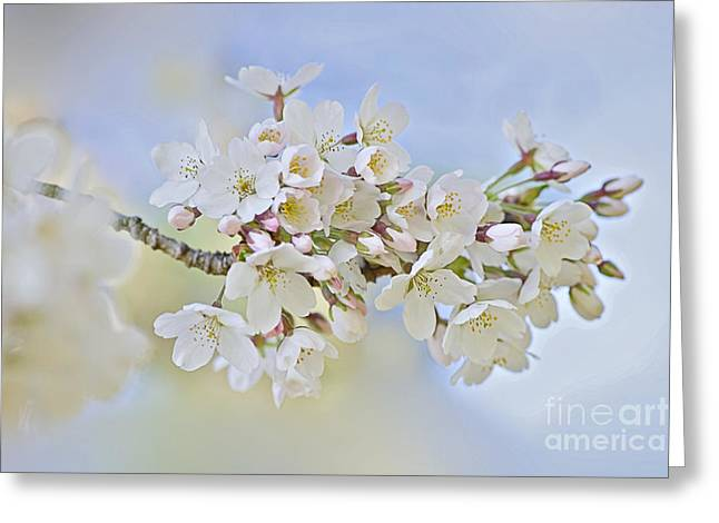 Blossom In Spring Greeting Card by Jacky Parker