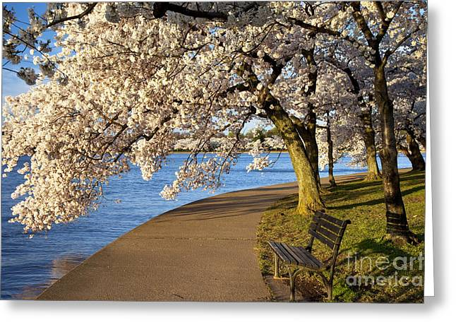 Blossoming Cherry Trees Greeting Card by Brian Jannsen