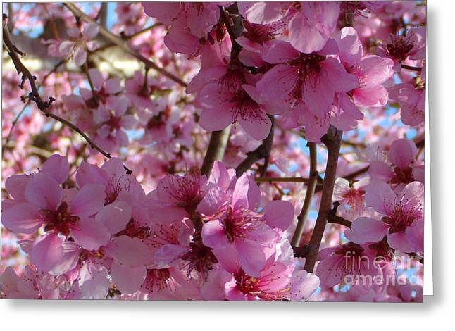 Greeting Card featuring the photograph Blossoms by Lydia Holly