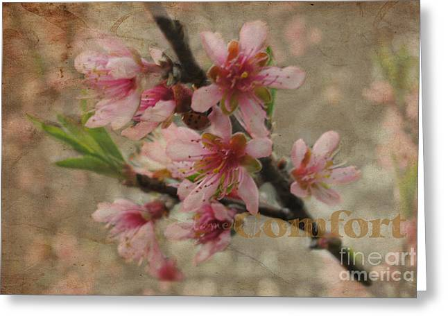 Greeting Card featuring the photograph Blossoms by Tamera James