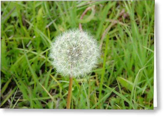 Greeting Card featuring the photograph Blow A Wish by Wendy McKennon