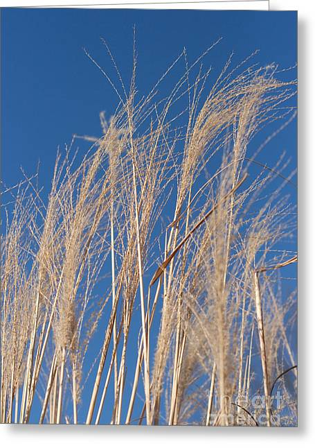 Greeting Card featuring the photograph Blowing In The Wind by Barbara McMahon