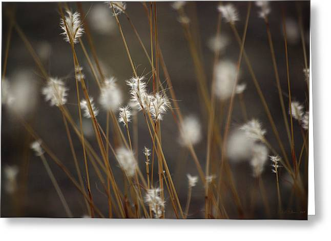 Greeting Card featuring the photograph Blowing In The Wind by Vicki Pelham